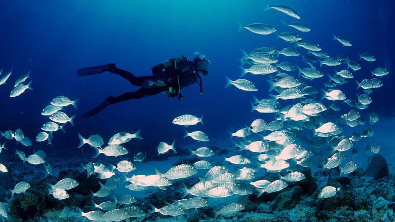 Scuba Diving Experience in Tarifa - Main image