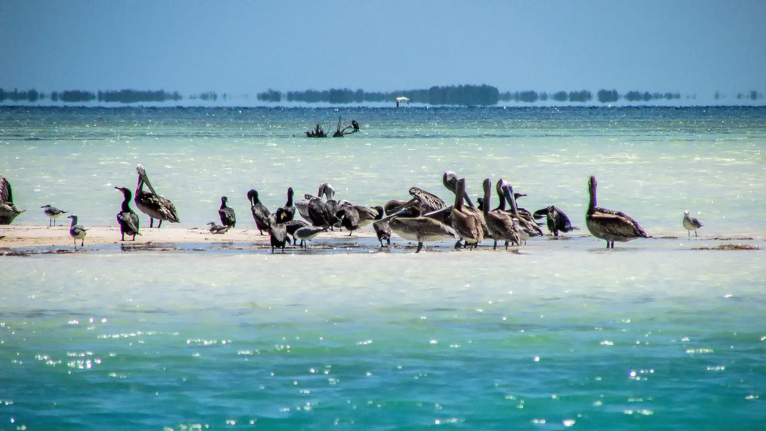 Holbox Island Day Tour - Main image