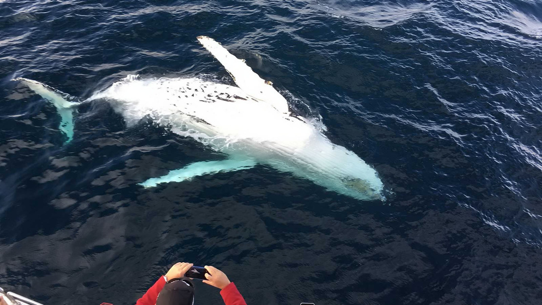 Safari in barca tra le Balene - Main image