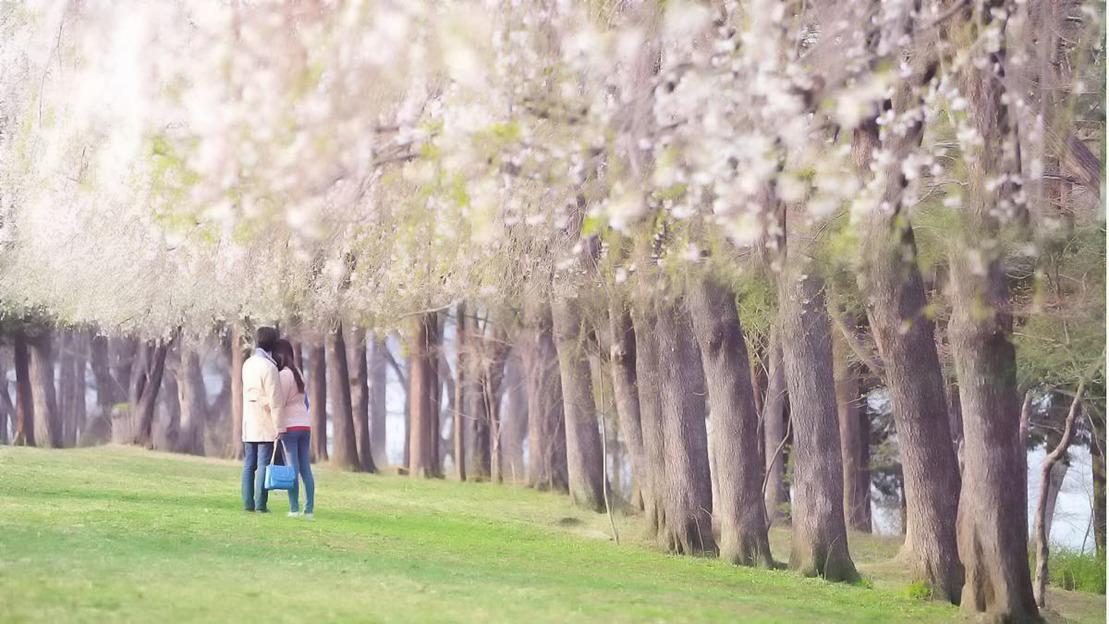 Seoul: Visita dell'Isola di Nami e di Petite France - Main image