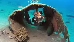 Snorkeling e Safari in Cammello al Blue Hole  - Main image