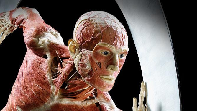 Biglietti per la mostra Body Worlds a Londra - Main image
