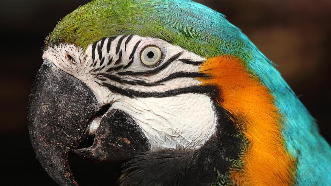 Biglietti per lo Zoo di Lisbona - Main image