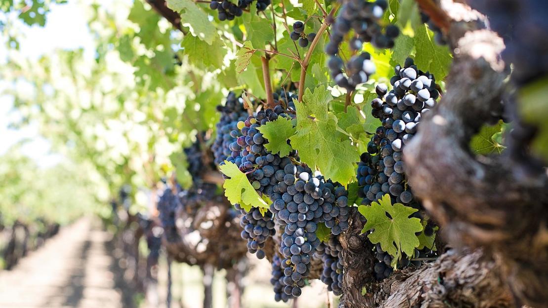 Tour della contea del vino di Napa e Sonoma - Main image
