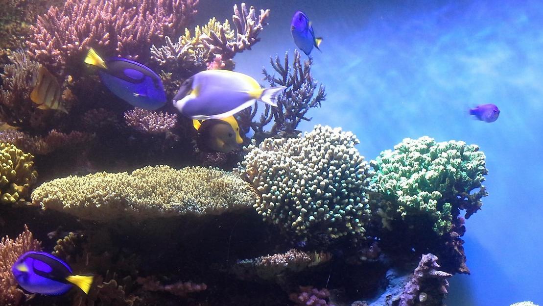 I biglietti per Monterey Bay Aquarium - Main image