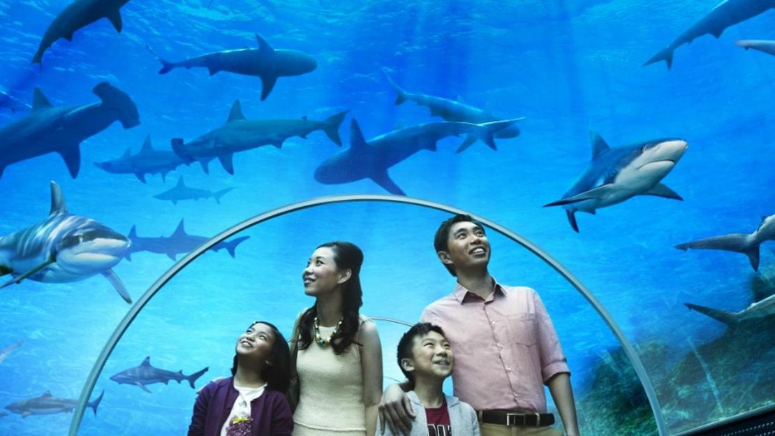 Acquario di Singapore MARE - Main image